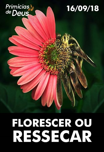 Florescer ou ressecar - Primícias de Deus - 16/09/18